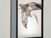 Brown-Pelican-Light-Box,-Cyndi-Strid,-Artist.WEB
