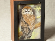 Northern-Spotted-Owl-Box,-Cyndi-Strid,-Artist.WEB