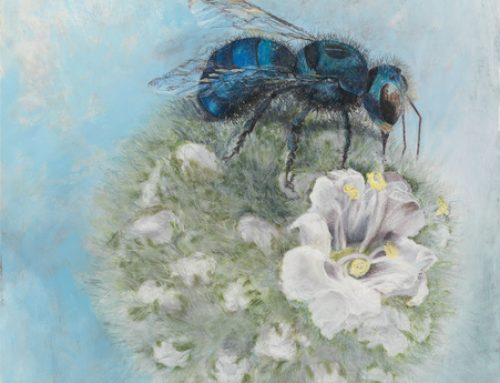 Meet the Native Bees!  Cyndi's latest work and story about local bees…