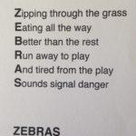 zebra-poem-parkdale-6128-copy